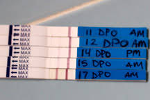 Pregnancy Test Accuracy Www Early Pregnancy Tests Com