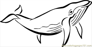Small Picture Ocean Animals Coloring Sheets Coloring Coloring Pages
