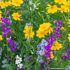 pacific northwest wildflower seed mix