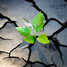 Image result for resilience
