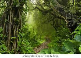 jungle background. Unique Jungle Asian Tropical Jungle To Jungle Background