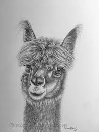 Lama Originale Disegno A Matita Animale Arte Home Decor Etsy
