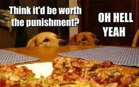 Image result for funny dog memes