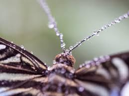 Schmetterling Nach Regendusche Foto Bild Natur Zoo