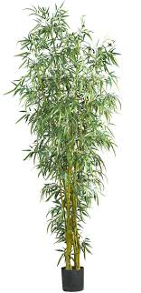 office tree. Features Uniquely Styled Bamboo Tree Natural Trunks Perfect For Home Or Office Product Type Plant Orientu2026 Pinteresu2026 C