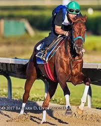 Gunnevera True Love Horses Horse Racing Thoroughbred Horse