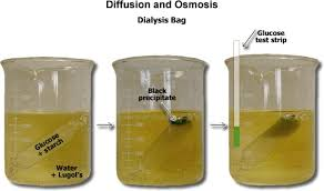 Iki Solution Selective Permeability Of Dialysis Tubing Lab Explained