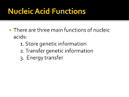 Functions Of Nucleic Acids Nucleic Acids Ppt Download