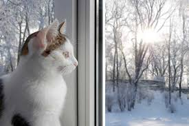 Image result for cats in winter