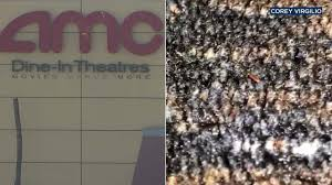 tiny bugs crawl all over carpet at ontario amc theatres