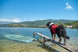 Hundstage Im Sommer Abkühlung Für Euren Vierbeiner Wandern Mit Hund