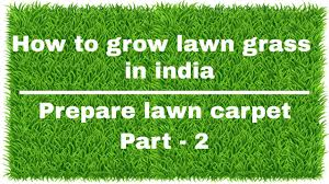 how to grow lawn grass in india prepare lawn carpet part 2