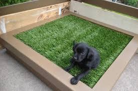dog bathroom patio