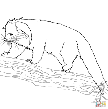 Small Picture Binturong coloring pages Free Coloring Pages
