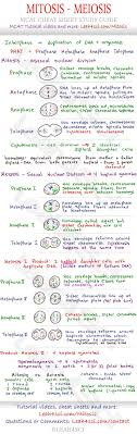 best ideas about cell biology molecular biology mitosis and meiosis mcat cheat sheet study guide learn what happens in each step loved biologybiology helpscience