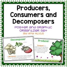 Producer And Consumer Venn Diagram Producers And Consumers Graphic Organizer Worksheets Tpt