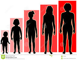 Stages Of Puberty In Males Chart Female Growth Stages Stock Illustration Illustration Of