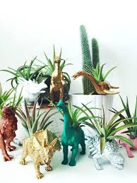 decorative plants for office. Decorative Plants For Office Customize Your Own Dinosaur Planter With Air Plant Home Decor Desk Accessory Crossword 0