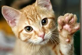Imagini pentru cats