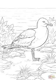 California Gull coloring page | Free Printable Coloring Pages