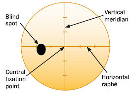 Visual Field Chart Interpretation Community Eye Health Journal Visual Field Testing For