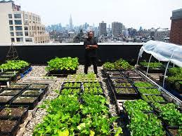Rooftop Gardens 3 Rooftop Gardens .