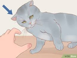 3 Ways To Stop A Cat From Biting Or Scratching During Play