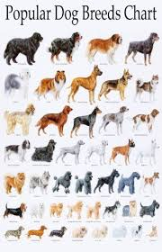 dog chart pin on dogs