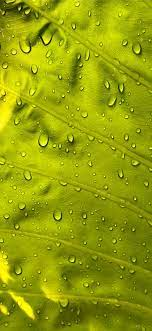 water drops on green leaf iPhone X ...