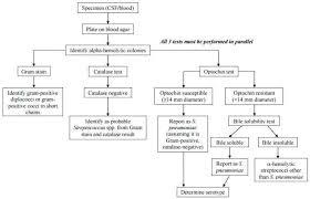 Unknown Bacterial Identification Chart Www