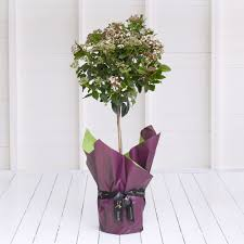 a unique potted plant for around the home decorated in gift wrapping and finished with a stylish ribbon