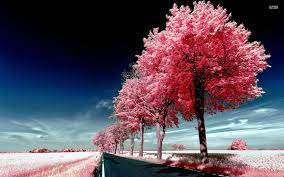 1920x1200 Lovely Pink Trees desktop PC ...