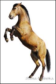 horse drawing in color. Contemporary Drawing Horse Drawing By Ladowska  In Horse Drawing Color