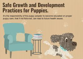 Puppy Growth And Development