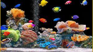 Fish Tank Moving Desktop Backgrounds Download Animated Fish Tank