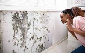 to clean and get rid of mold