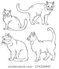 cat drawing outline. Exellent Outline Vector Outline Sketches Of Four Cats In Various Poses With Cat Drawing Outline W
