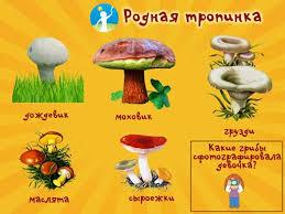 Детям о грибах грибы в сказках рассказах видео картинках и  vidi gribov kartinka dlya detei 2