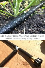 diy drip irrigation s raed system with pump for containers fruit trees