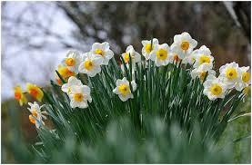 """Képtalálat a következőre: """"virágok kertészkedés"""""""