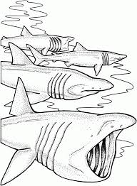 Small Picture Adult shark color page Shark Coloring Pages For Preschoolers