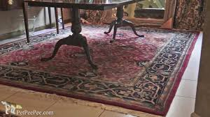cat in oriental rug by oriental rug cleaning service