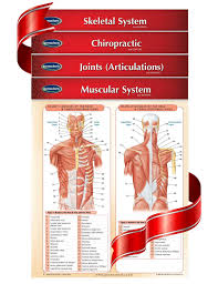 Chiropractic Body Chart Chiropractic Medicine 4 Chart Quick Reference Guide Bundle