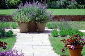 nepeta and heuchera are easy care colourful garden pot plants