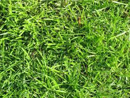artificial grass texture. Free Grass Texture Stock Photo Artificial