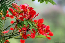 Assamese Flower Chart Assam Flowers Photo Studio Oakokho