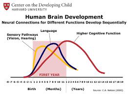 Brain Development Large Kids Planet