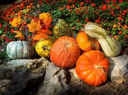 3 Tips For Fall Gardening Paradiso InsuranceFall Gardening