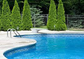 trees around pools australia trees around pools arizona palm trees around pools