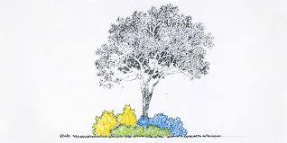 Tree Design Landscape Design Trees At Arborday Org